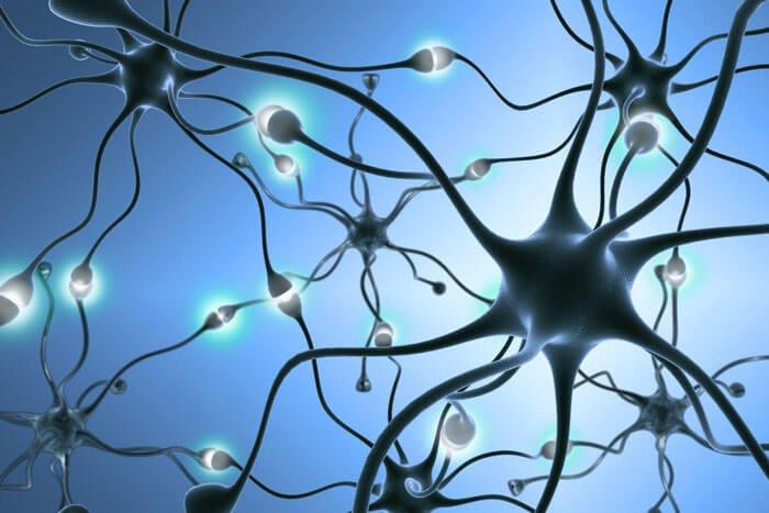 محققان انجمن ملی ام اس آمریکا، استراتژی هایی را برای حمایت از سلول های عصبی در ام اس پشرونده شناسایی کردند