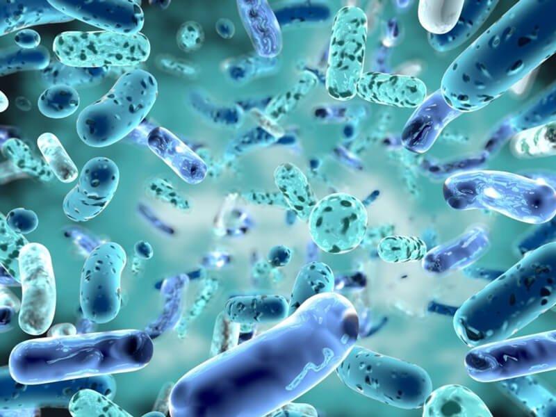 پتانسیل تنظیم کنندگی عدم تعادل باکتری های روده در مدل های آزمایشگاهی ام اس