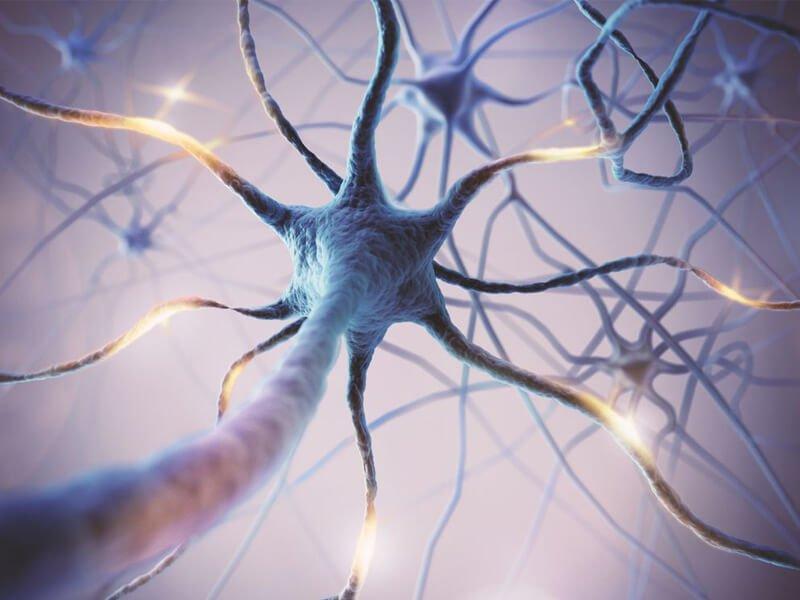 چرا با افزایش سن مغز ما ترمیم میلین را متوقف می کند؟
