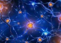 تغییر یک ژن می تواند ترمیم میلین را در موش های مسن افزایش دهد